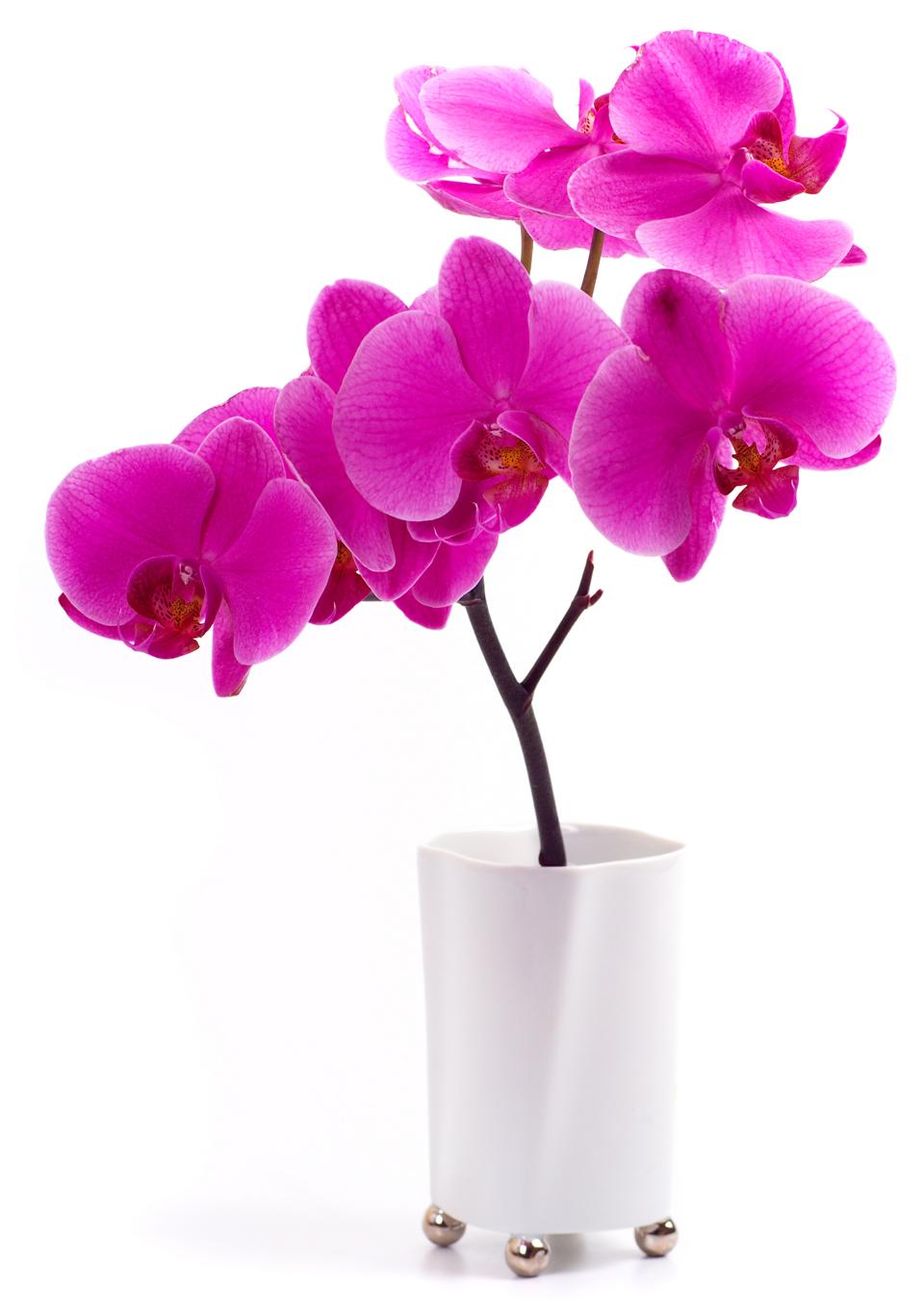 Stickers fleur pot orchide des prix 50 moins cher qu 39 en magasin - Pose stickers muraux ...