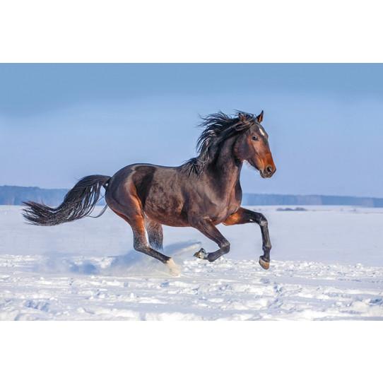 Poster - Affiche cheval - Des prix 50% moins cher qu\'en magasin