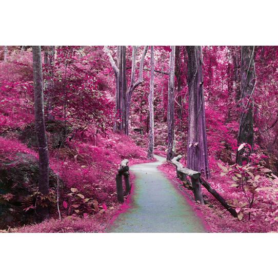 Poster - Affiche forêt
