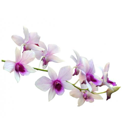 Stickers Orchidée