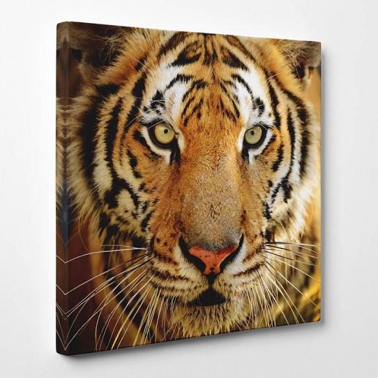 tableau toile tigre 12 des prix 50 moins cher qu 39 en magasin. Black Bedroom Furniture Sets. Home Design Ideas