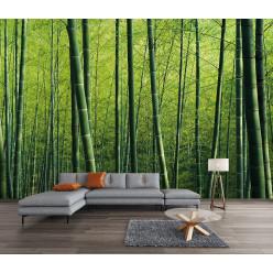 Papier peint forêt bambous