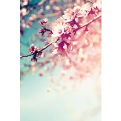 Poster - Affiche blossom