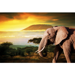 Poster - Affiche éléphant