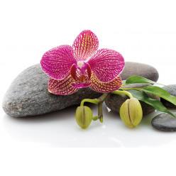 Poster - Affiche galets orchidée