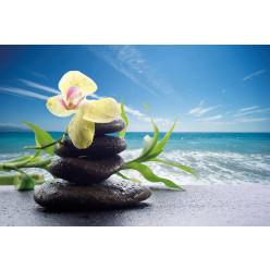 Poster - Affiche galets orchidée mer