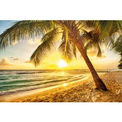 Poster - Affiche plage couché de soleil palmiers