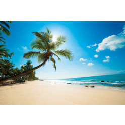 Poster - Affiche plage palmiers