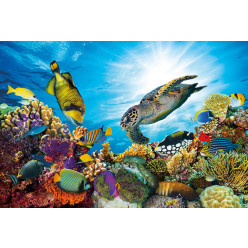 Poster - Affiche poissons tortue marine