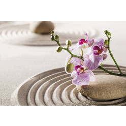 Poster - Affiche sable galet orchidée