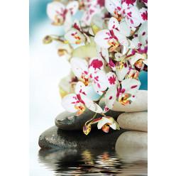 Poster - Affiche zen