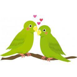 Stickers oiseaux