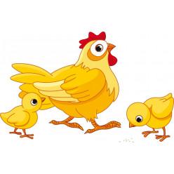 Stickers poule et ses bébés