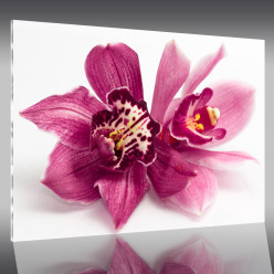 Tableau Plexi Fleur