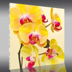 Tableau Plexi Orchidée