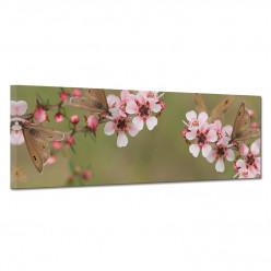 Tableau toile - cerisier