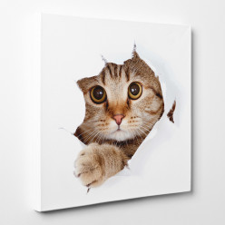 Tableau toile - Chat 16