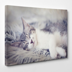 Tableau toile - Chat 18