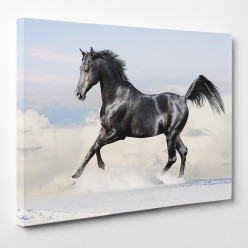 Tableau toile - Cheval 16