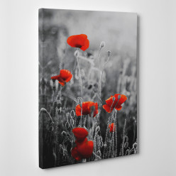 Tableau toile - Coquelicots 2