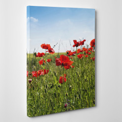 Tableau toile - Coquelicots 4