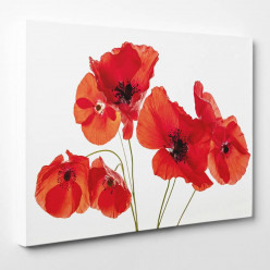 Tableau toile - Coquelicots 7