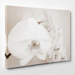 Tableau toile - Fleur 4