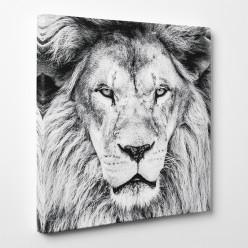 Tableau toile - Lion