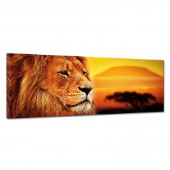 Tableau toile - Lion 7