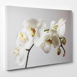 Tableau toile - Orchidée 2