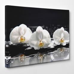 Tableau toile - Orchidées 20