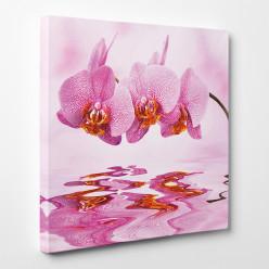 Tableau toile - Orchidées 6