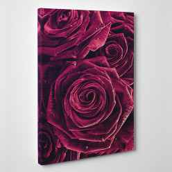 Tableau toile - Roses Zoom