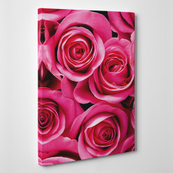 Tableau toile - Roses Zoom 2