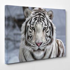 Tableau toile - Tigre 22
