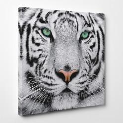 Tableau toile - Tigre 3