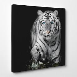 Tableau toile - Tigre 8