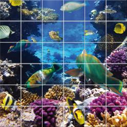 Stickers carrelage poissons