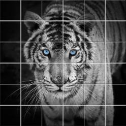 Stickers carrelage tigre