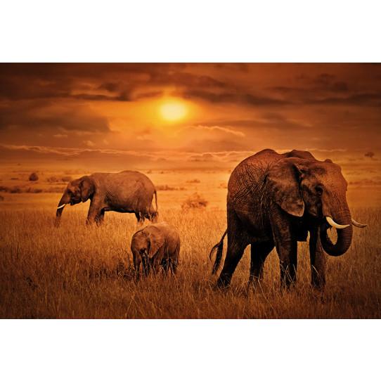 Poster - Affiche afrique éléphants