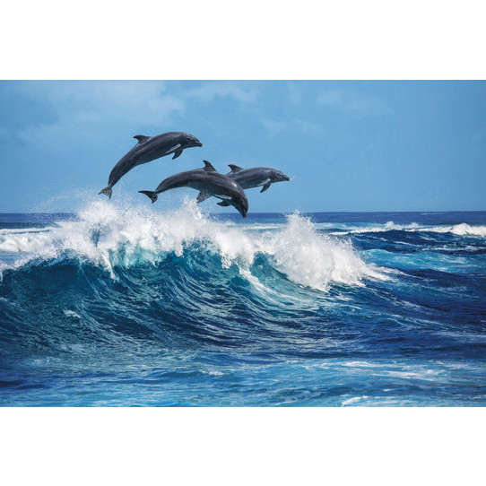 Poster - Affiche dauphins
