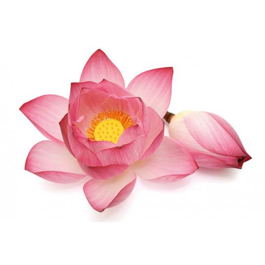 Poster - Affiche fleur de lotus