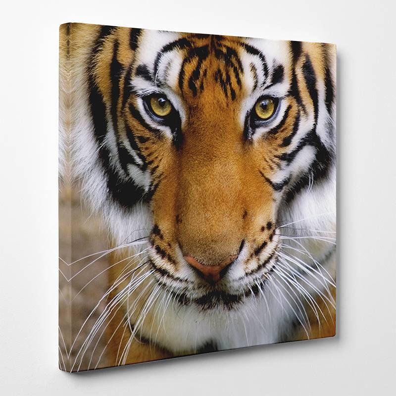 tableau toile tigre 2 des prix 50 moins cher qu 39 en magasin. Black Bedroom Furniture Sets. Home Design Ideas
