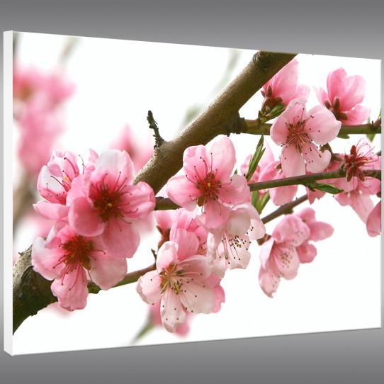Tableau Forex Fleurs